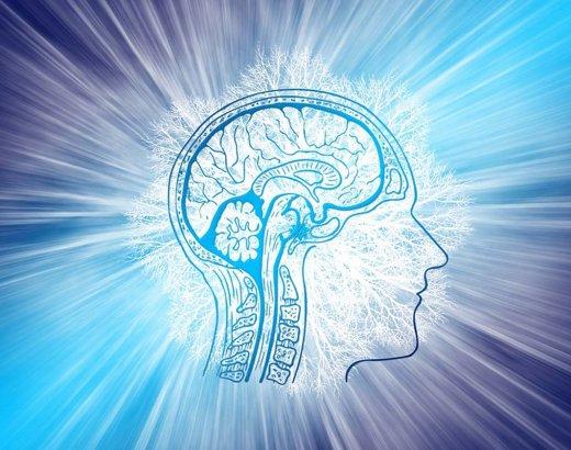 PNL, cerveau et neurosciences